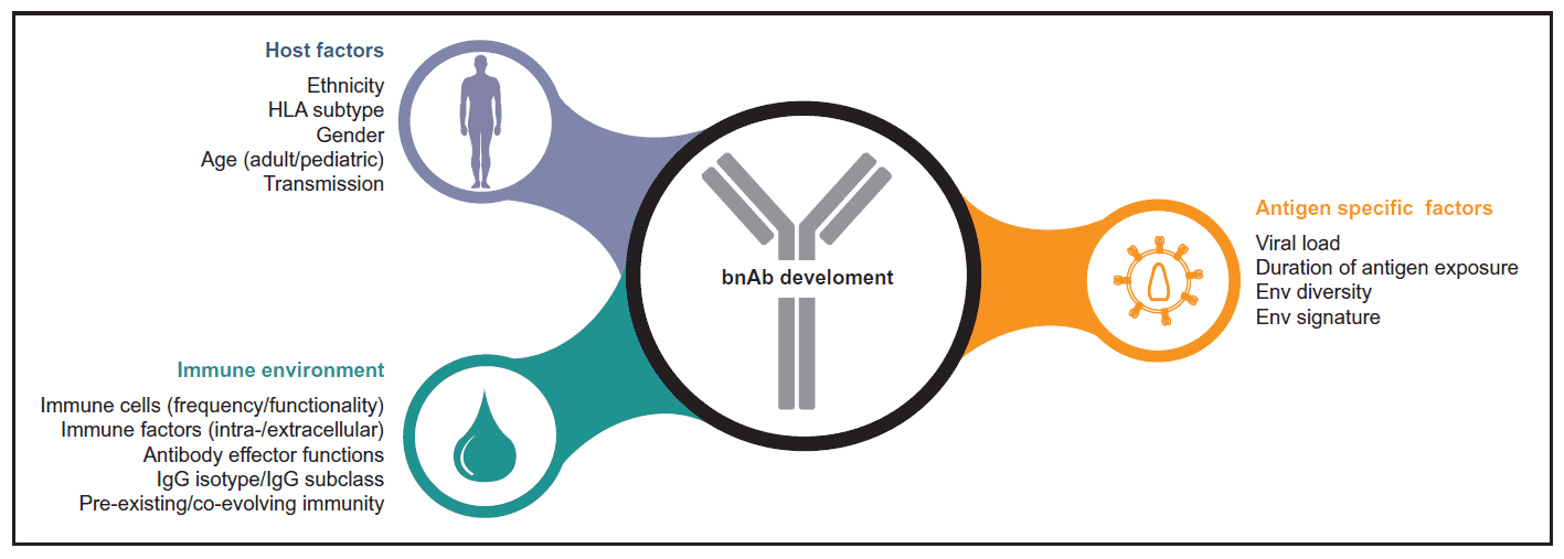 Determinants of broadly neutralizing antibodies (bnAbs) induction suggested by studies.